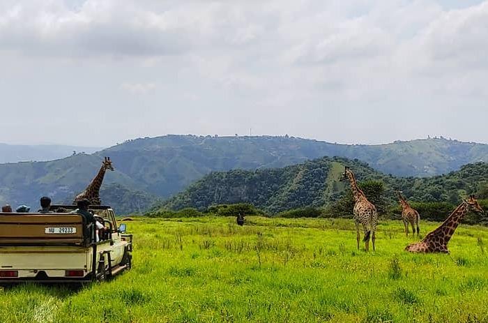 safari-game-drive_3